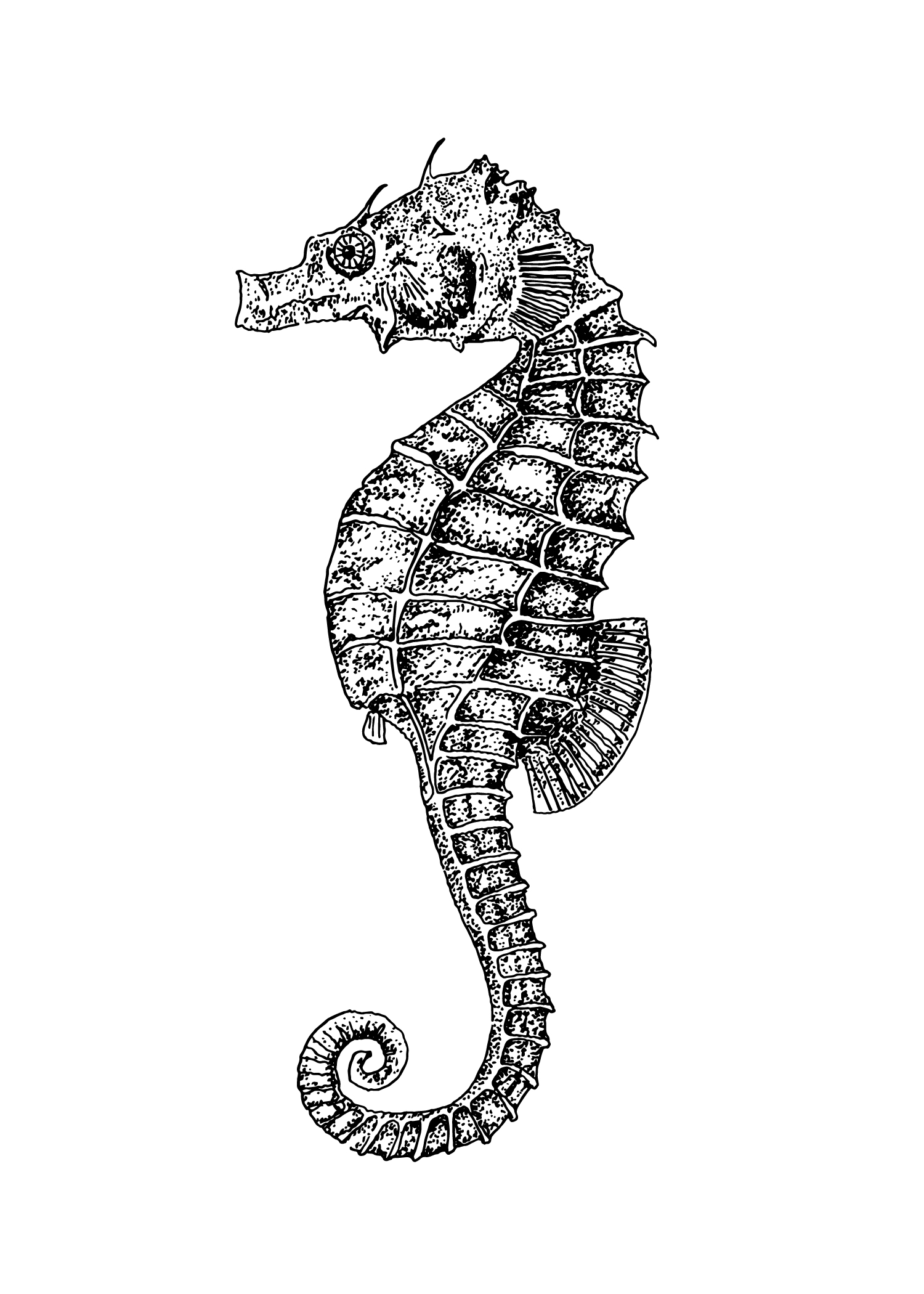 seahorse drawing 01